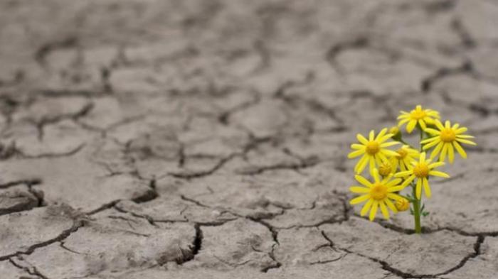 Nel fallimento c'è il seme del tuo successo